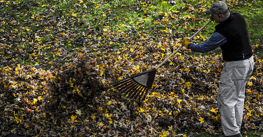 raking leaves before mowing